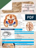 Neurologia Modulo