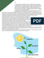 LA FOTOSINTESIS DE LAS PLANTAS