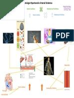 Esquema-Fisiopatologia-HTA