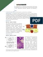 Tipos de Placentacion