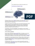 se identifican las áreas cerebrales relacionadas con la espi