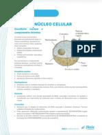 BIOLOGIA-4-NÚCLEO
