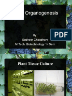 Plant organogenesis