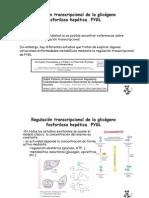 Regulación transcripcional de la glicógeno fosforilasa hepática_Ramón_Tamarit