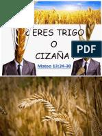 El trigo y la cizaña2