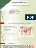 3. Insuficiencia suprarrenal y sindrome de cushing.