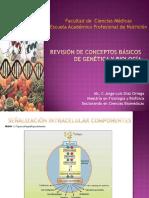 SESION 2 Revisión de conceptos básicos de genética y biología
