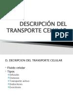 DESCRIPCIÓN DEL TRANSPORTE CELULAR