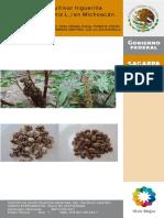 Higuerilla - Guía para cultivar higuerilla en Michoacán