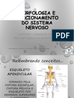 Aula 02 Ossos e conceitos em neuroanatomia