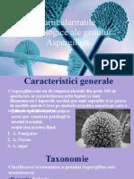 Particularitatile morfologice ale genului Aspergillus