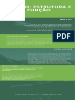 Núcleo_ Estrutura e função Infográfico