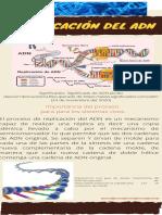Tarea 5_ Comprender La Organización y Expresión de Los Genes_parte Mary Duarte
