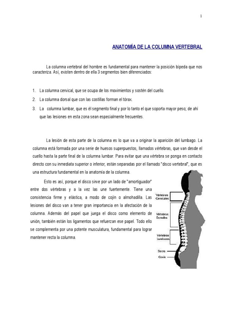 Anonimo - Anatomia columna vertebral