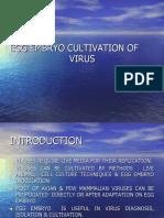 EGG EMBRYO CULTIVATION OF VIRUSES