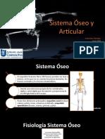 Sistema Esqueletico y Articular