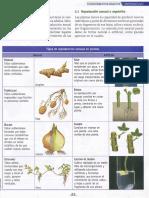 Reproducción de plantas plus