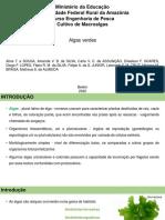 Cultivo de Macroalgas - Algas Verdes