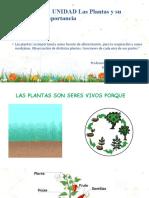 1 Ciencias  Clase las plantas