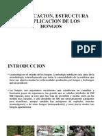 CLASIFICACION, ESTRUCTURA Y REPLICACION DE LOS HONGOS