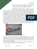 Tanatologia Forense Lesoes Vitais e Pos Mortais Cronotanatognose Necropsia Medico Legal Videoaula 15