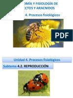 Unidad 4 Clase  1- Reproducción1