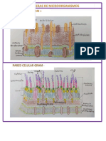 PDF BARREAS MICROORGANISMOS Y PAMPS