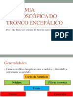 Anatomia Macroscópica do Tronco Encefálico