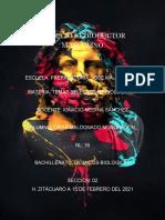 David Maldonado Nl 16 Aparato Reproductor Masculino
