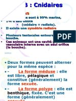 4-Cours Cnidaires (1) (1)