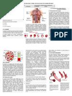 sistema circulatorio-...