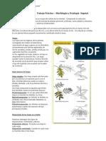Arbori y Fruticultura Troxler 1 Morfología arboles