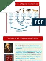 Hierarquia_Categorias_Taxonómicas_2020_2021_3