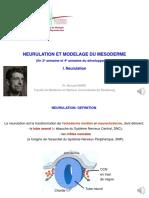 6. Neurulation et modelage du mésoderme