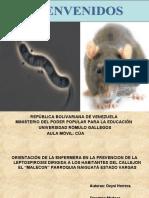presentacion LEPTOSPIROSIS (1)