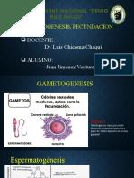 gametogenesis juan