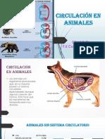 CIRCULACIÓN EN ANIMALES 7°