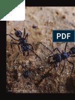 8 Riqueza y abundancia de organismos Andakí_ColAmaz12