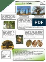 le-baobab