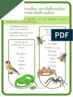Los Animales Vertebrados e Invertebrados Hoja Informativa Ver 2