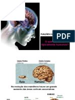 funcao_cortical_superior_NeuroBiomed