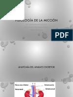 3 Fisiología de la Micción-converted