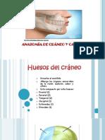 Anatomia Maxilo facial