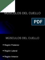 2-MÚSCULOS-DEL-CUELLO
