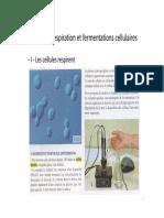 ST2_respiration_et_fermentations_cellulaires