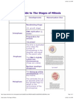 chap 3 Cells  Structure, Organelles, and Mitosis Study Guide- Stages of Mitosis