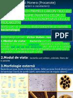 BACTERII_procariote