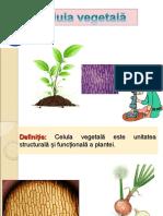 0_celula_vegetala