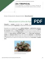 ► Conoce todos los cuidados de las plantas del género Hypoestes