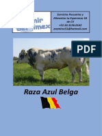 catalogo_BelgianBlue